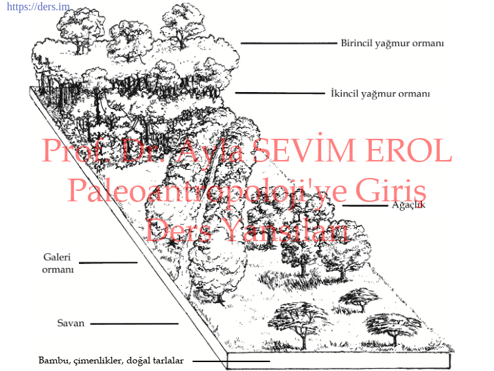 Paleoantropoloji'ye Giriş Ders Notları  -  4