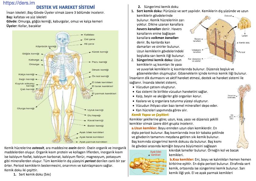 Destek Ve Hareket Sistemi - 12 Sınıf Biyoloji