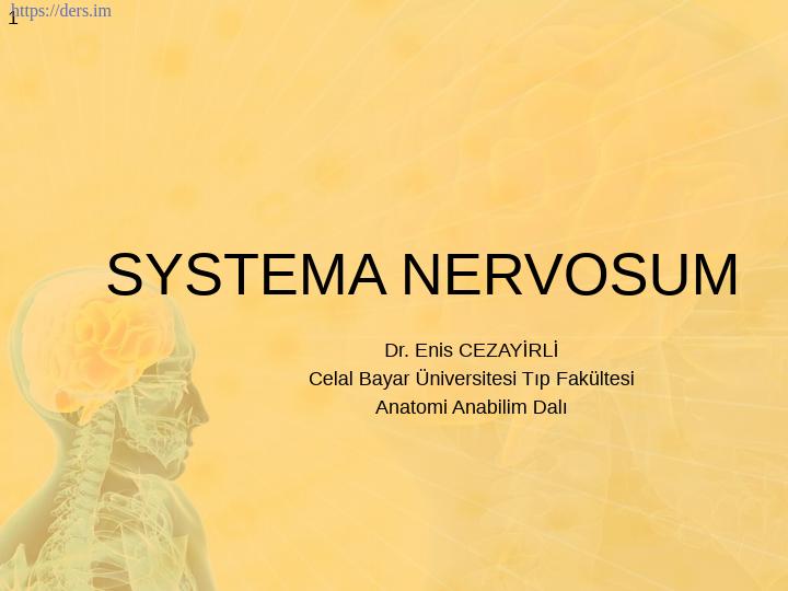 Diş Hekimliği Fakültesi / Anatomi / Sinir Sistemi Ders Notları