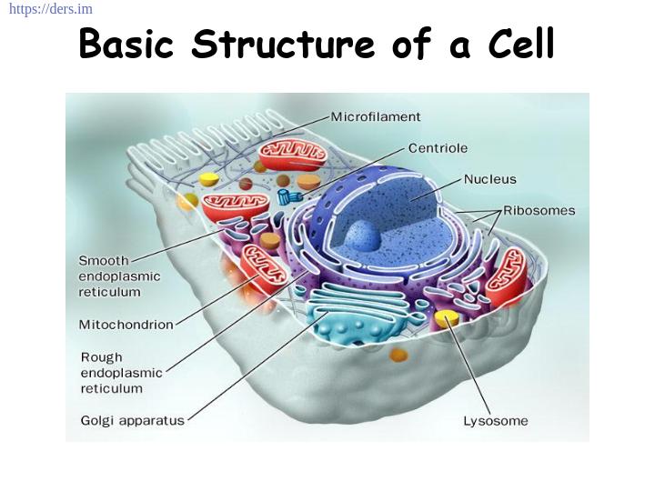 Diş Hekimliği Fakültesi / Histoloji ve Embriyoloji / Bir Hücrenin Temel Yapısı Ders Notları