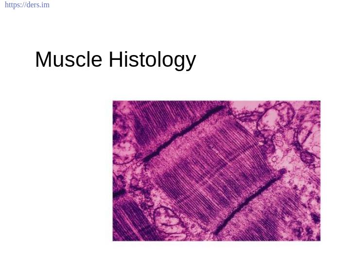 Diş Hekimliği Fakültesi / Histoloji ve Embriyoloji / Kas Histolojisi Ders Notları