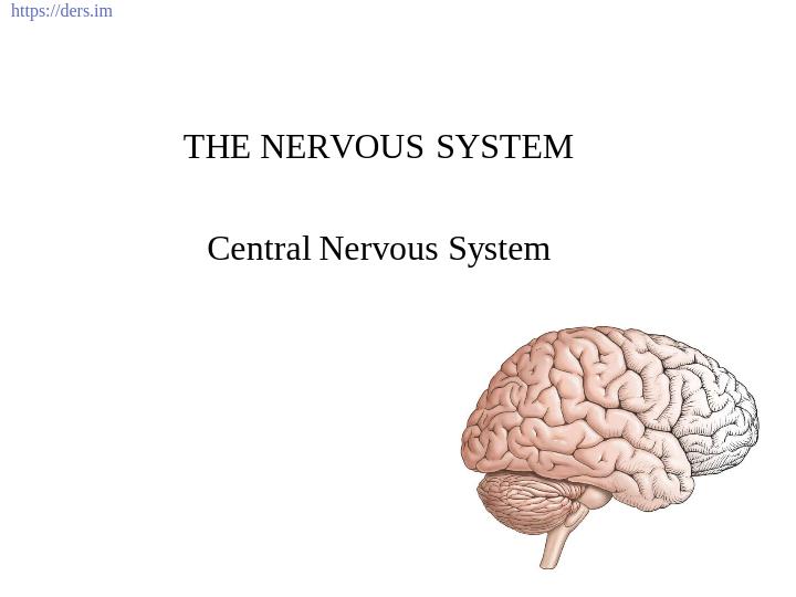 Merkezi Sinir Sistemi Ders Notları
