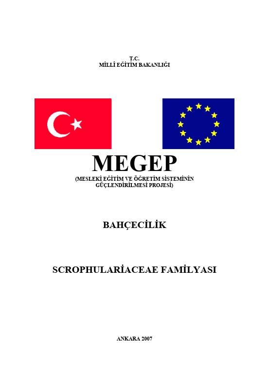 Scropulariceae Familyası