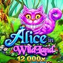 Alice and Wildland