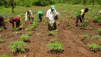 11.3 million Ghanaians are in agriculture