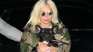 Lady Gaga's dog-walker shot and bulldogs stolen