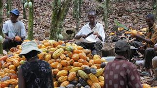 Cocoa farmers threaten demo over government's indebtedness to them