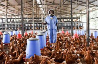 Incorporate business principles to succeed- Expert to poultry farmers