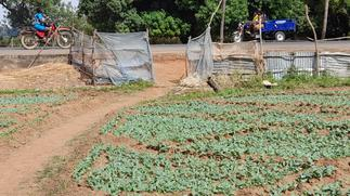 UE/R: GHS worried as farmers use mosquito nets for farm fencing