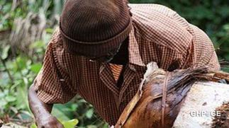 Central Region: Palm wine tapper who went missing found with the head cut off
