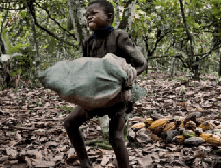 Global Civil Society to governments, cocoa companies
