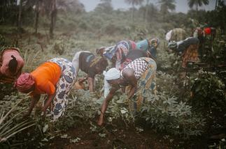 About 75 percent of agribusiness firms not aware of AfCFTA