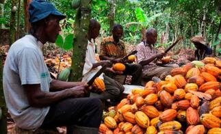 Ghana threatens to expose chocolate brands underpaying farmers