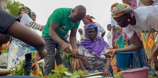Green Ghana Day: Global Shea Alliance to plant 10 Million shea trees across West Africa