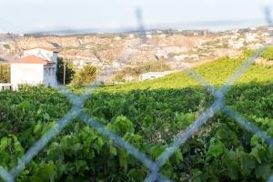 weer Kreta wijngaarden