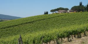 Free-webinar-walking-in-tuscany-on-the-via-francigena-italy