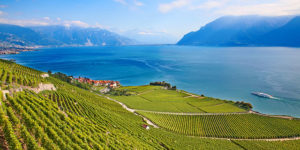 Lake-Geneva-vineyards-Switzerland-Via-Francigena-camino-Francigena-ways