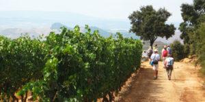 camino-guided-tours-la-rioja-pilgrims-caminoways
