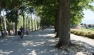 lucca-walls-cycling-walking-tuscany-italy-via-francigena-ways