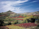 rioja-french-way-caminoways-wine-region