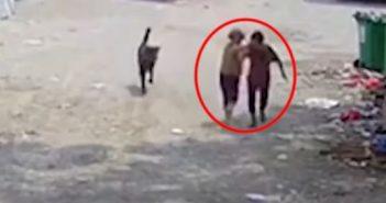 中國大陸福建漳州一名71歲的郭姓老婦人,於17日在路上被一隻發狂的大型犬攻擊,而老婦人最終在送醫後宣告不治。(圖/翻攝微博)