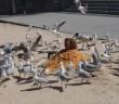 澳洲網紅團體「馬蒂與麥可(Marty and Michael)」,近日為了增加頻道流量竟跑到黃金海岸沙灘上「用薯條活埋自己」,故意吸引海鷗猛啄身體,慘遭網友公審。(圖/擷取自《martyandmichael》IG)