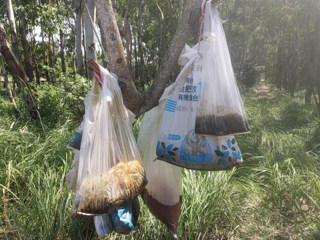 嘉義縣家畜疾病防治所人員前往,卻驚見一棵光禿樹幹掛滿7、8個發臭塑膠袋,打開發現裡頭裝的是死貓、金紙。(圖/嘉義縣政府提供)