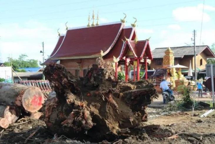 古樹被劈開。(圖/翻攝自微信)
