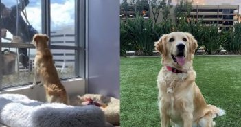 奧布里的飼主常在抖音與IG分享牠的可愛日常。(圖片翻攝抖音pawbrey/IG@pawbrey_)
