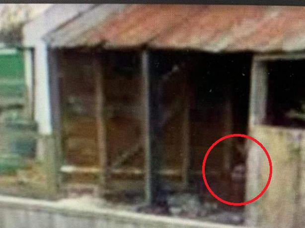 穀倉中發現一個人頭。(圖/Google Maps)