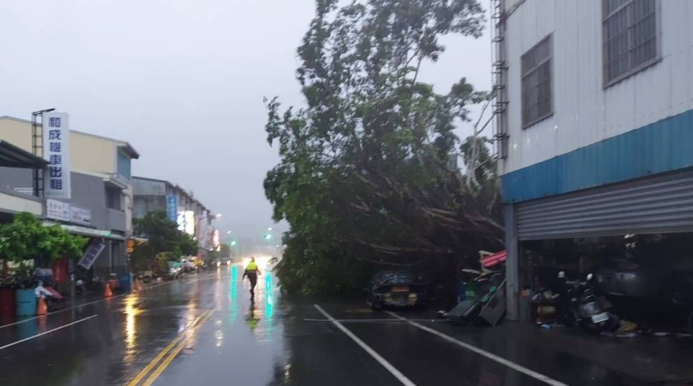 台東發生樹木倒塌、壓傷汽車駕駛事件。(圖/警方提供)