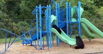 學校老師們捕捉到熊寶寶快樂溜滑梯的一幕。(圖/翻攝自「Betsie Stockslager Emry」Facebook)