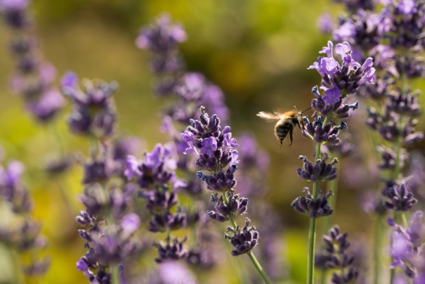 Image for In Pictures: Buzzing bees, it's the tiny workers' special day!