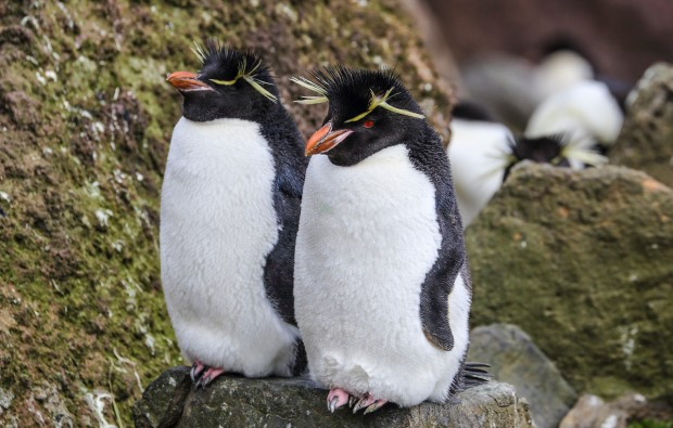Image for In Pictures: It's World Wildlife Day today!