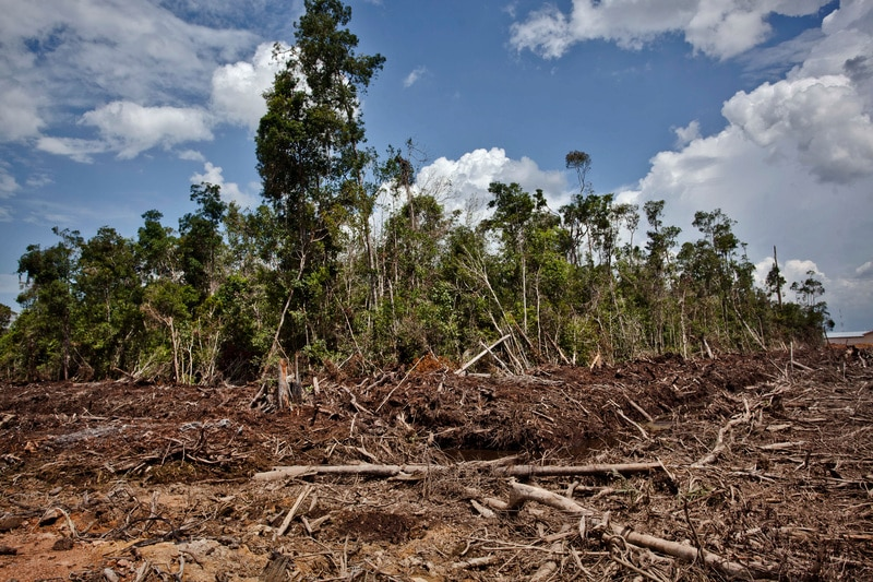 Image for Who still banks on destroying Indonesia's forests?