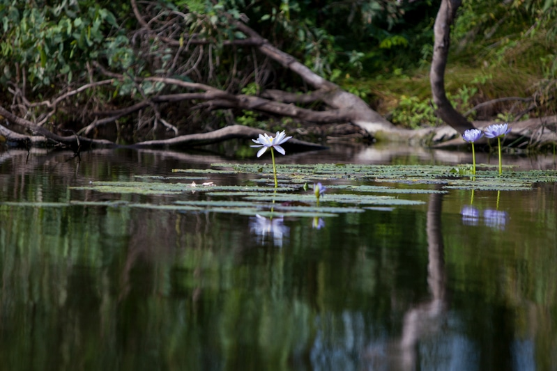 Image for In pictures: Wonderful Wetlands, celebrating World Wetlands Day