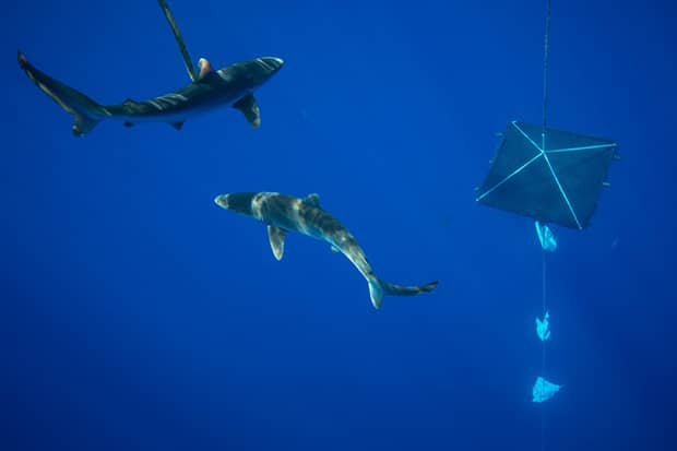 Image for Taking Action on Tuna