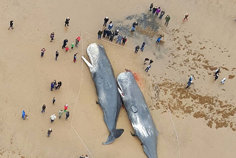 Image for Why do whales strand on beaches?