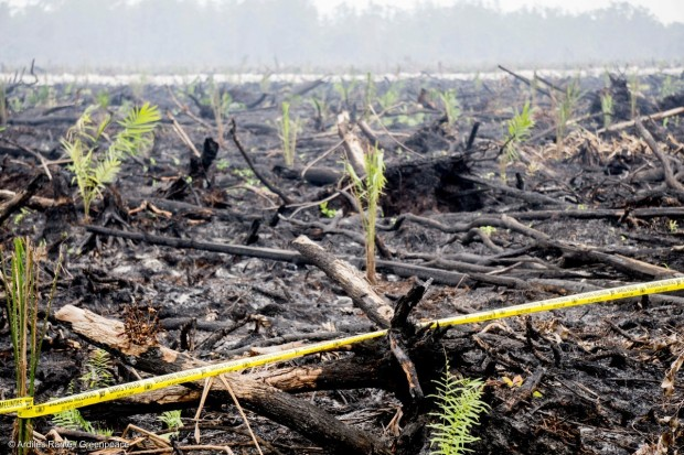 Image for Palm oil: who's still trashing forests?