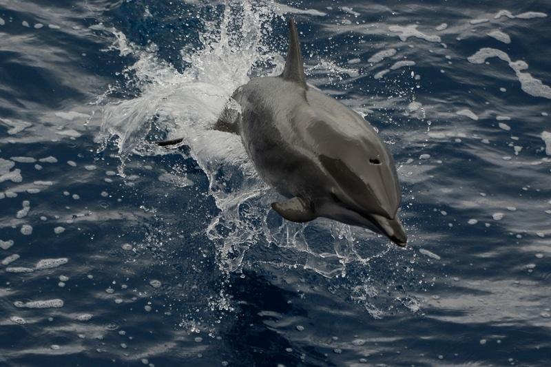 Image for In Pictures: Flipper flying there under the sea, it's Dolphin Awareness Month
