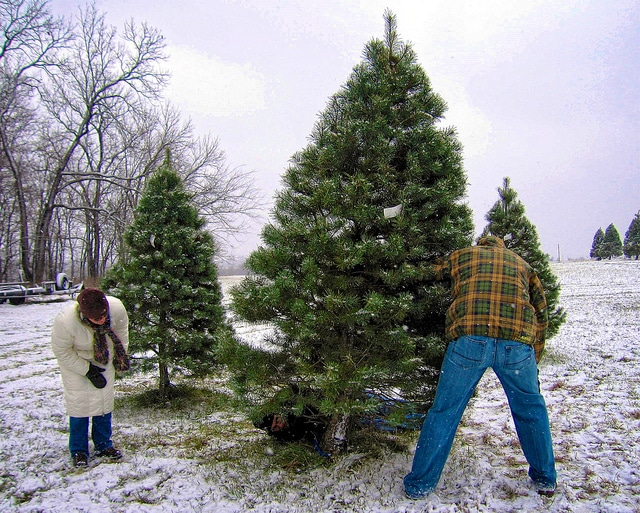 Image for 5 eco-friendly ways to dispose of your old Christmas tree