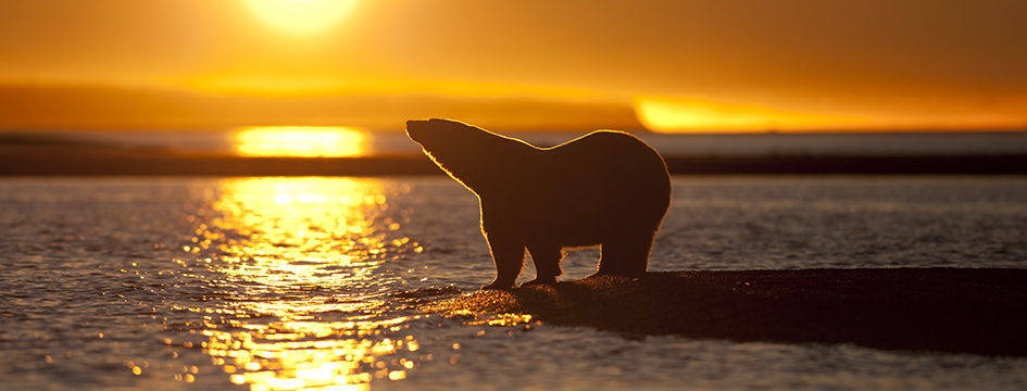 Image for The Greenpeace Environmental Trust