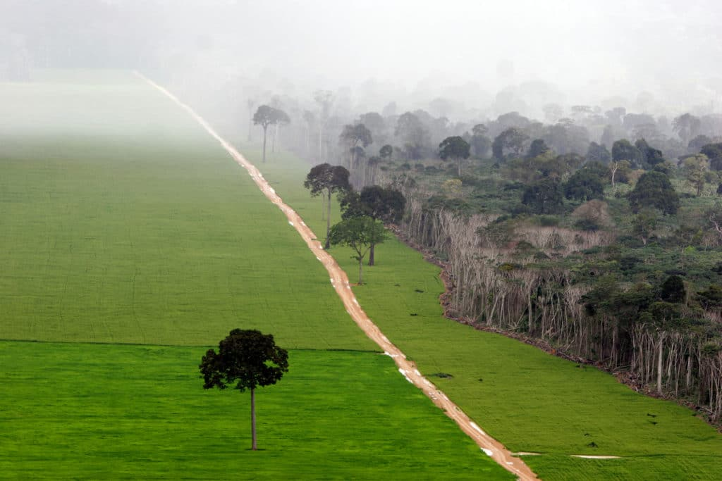 Image for 10 years ago, the Amazon was being bulldozed for soy. Then everything changed.