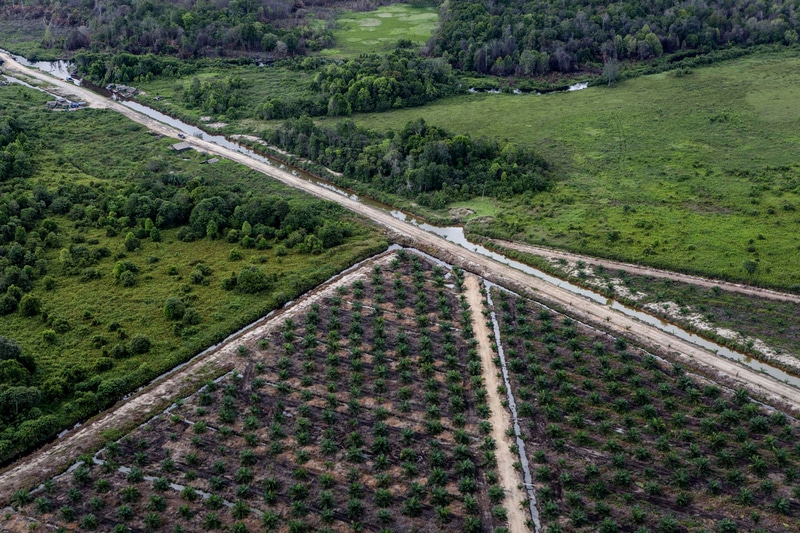 Image for Time is running out for destructive palm oil company IOI