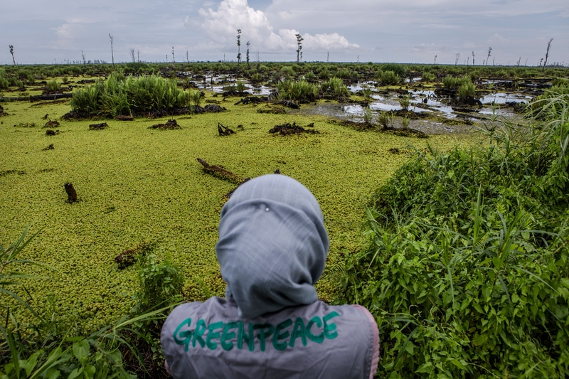 Image for Palm oil giant IOI has lost customers for destroying forests, but will it change?