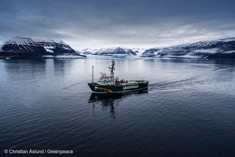 Image for Where Does Greenpeace Stand on Seal Hunting?