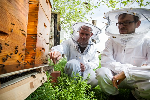 Dirk Zimmermann (right), Greenpeace campaigner for sustainable agriculture, and beekeeper Dr. Simon Bach, observe the bees entering the hive.