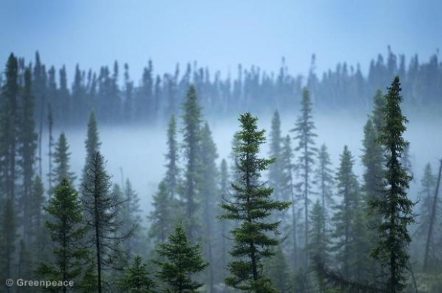 Image for 9 facts you need to know about forests and trees