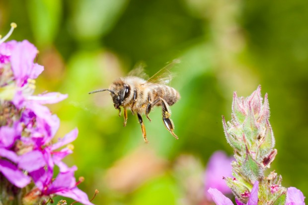 Image for In pictures: Hey Honey, Bees make so much more than that