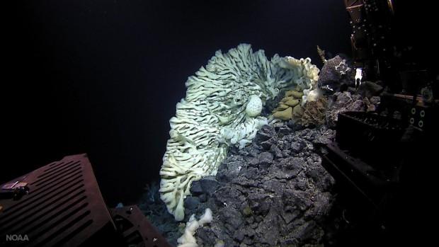Giant sea spunge